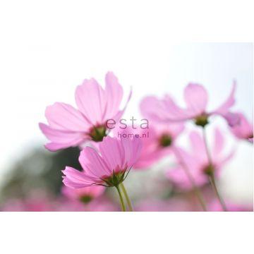 Fototapete Feldblumen Rosa von ESTA home