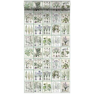 XXLVliestapete Seiten aus botanischen Büchern Hellgrau und Grün von ESTA home