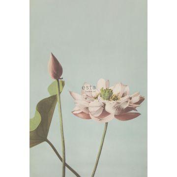 Fototapete Lotusblume Altrosa von ESTA home