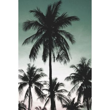 Fototapete Palmen Petrolgrün von ESTA home