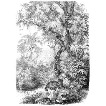 Fototapete Dschungelmuster Schwarz-Weiß von ESTA home