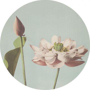 selbsklebende runde Tapete Lotusblume Hellrosa und Graublau von ESTA home