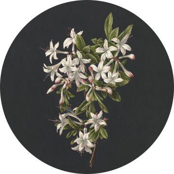 selbsklebende runde Tapete Blüte Hellrosa und Schwarz von ESTA home