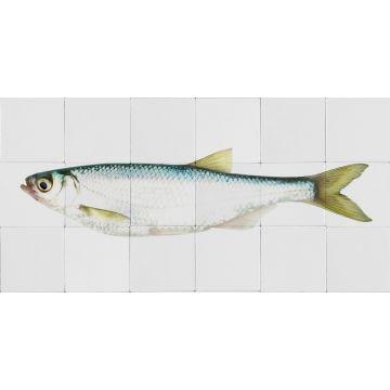 selbsklebende Wandtattoo Fisch Gelb und Blau von ESTA home