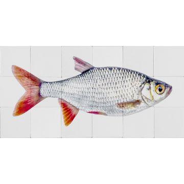 selbsklebende Wandtattoo Fisch Grau und Rot von ESTA home