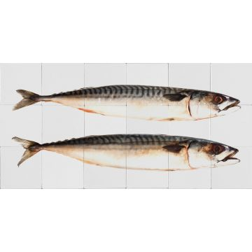 selbsklebende Wandtattoo Fische Grau von ESTA home