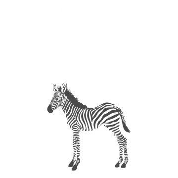 Fototapete Zebras Schwarz-Weiß von Origin