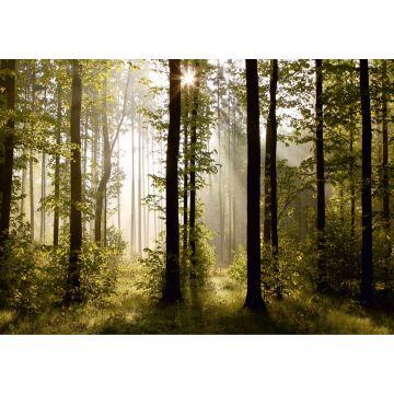 Fototapete bewaldete Landschaft Grün von Sanders & Sanders